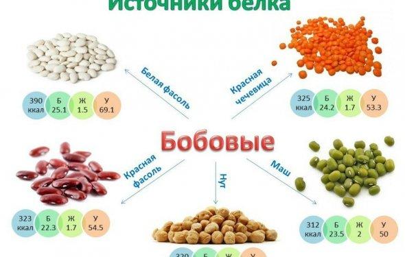 Рецепты белковых блюд[править]